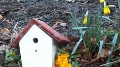 Bunt bemaltes Vogel - Holzhaus